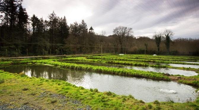 Goatsbridge Trout Farm History in Video