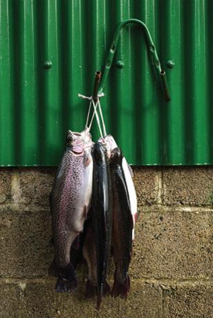 story-goatsbridge-trout-story