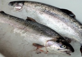 product-gutted-trout
