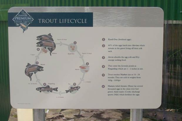 Rainbow Trout Lifecycle