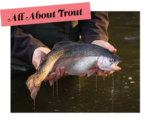 All About Trout